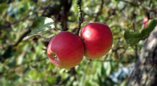 fruit-3151698_1920